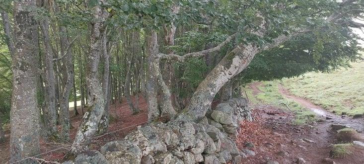 Les rares forêts suintent