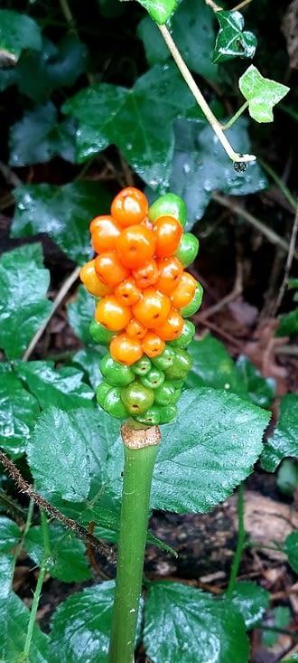 J'aime cette plante, que je rencontré peu souvent, en solo surtout