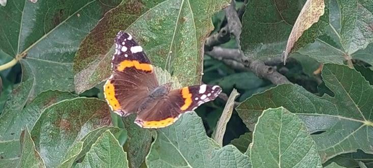 Hey! Un papillon moins timide que les autres!