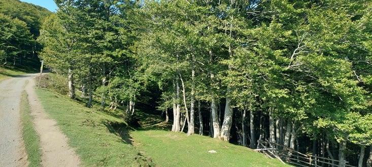 Une partie du chemin à plat, en forêt de chênes et bouleaux