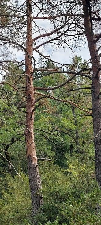 Dans des forêts de buis, chênes et pins
