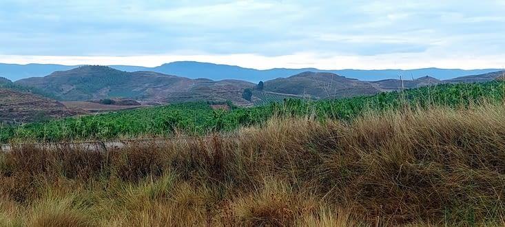 Des collines au loin., puis