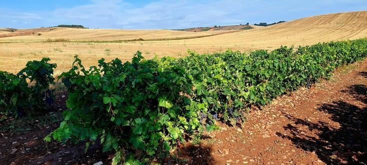 Nous quittons gentiment les vignobles du Rioja