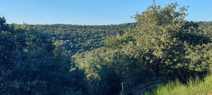 On entre en forêt, ça change du blé, sur l'arrêté des Montés de Orca
