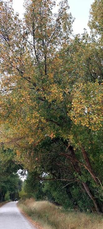 Les prémices de l'automne?