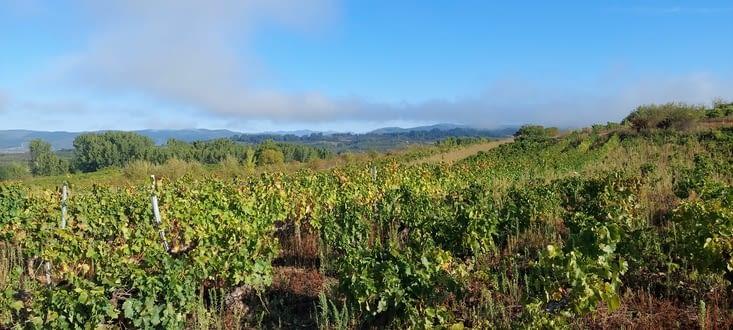 La vallée du Bierzo est réputée pour ses vins, un peu moins que le Rioja quand même...