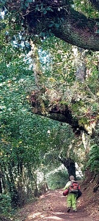 A peine croyable! En pleine forêt, le chemin est nettoyé de ses feuilles mortes!