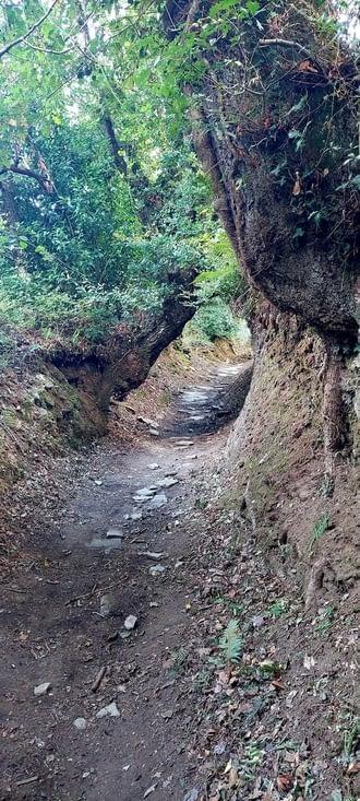 Le chemin semble creusé dans la roche, impressionnant