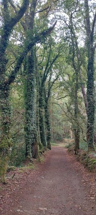 Les eucalyptus alternent avec les chênes. Il manquera sur titres les photos de forêt les o