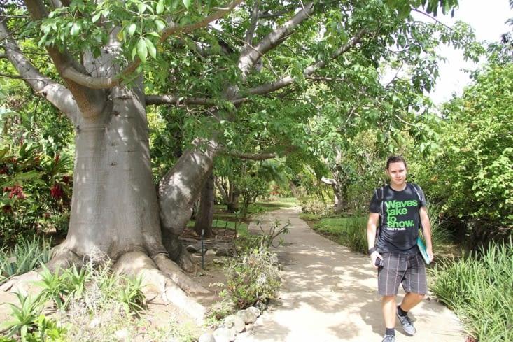 Alex et le baobab