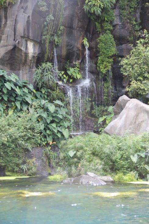 Végétation de la cascade
