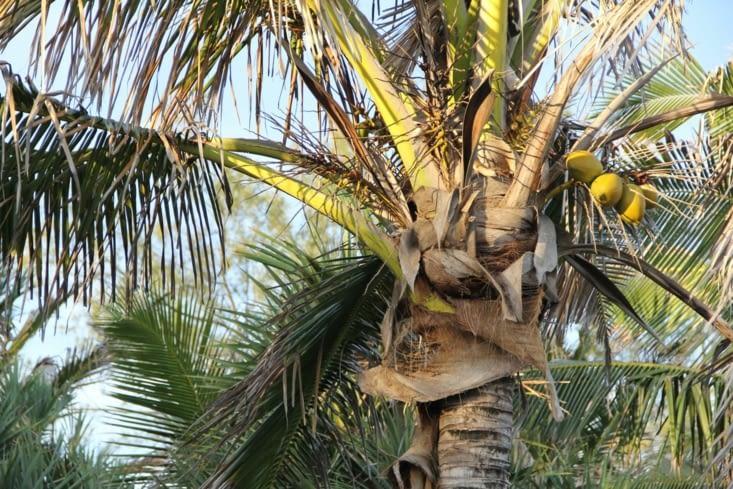 La plage, les cocotiers...