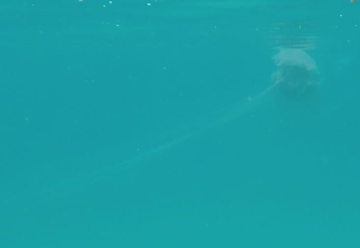 La méduse qui a terrifiée Carine
