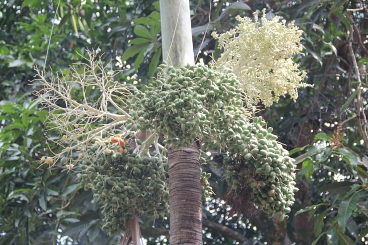 Provenance de l'huile de palme