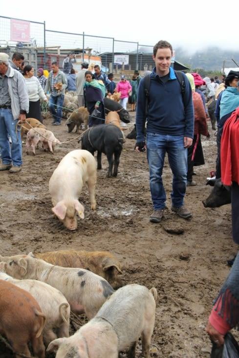 Alex au milieu des cochons