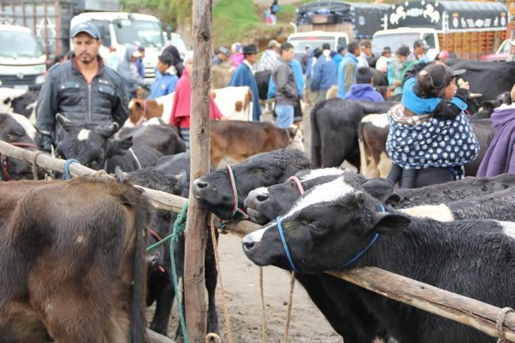 Mercado de los animales