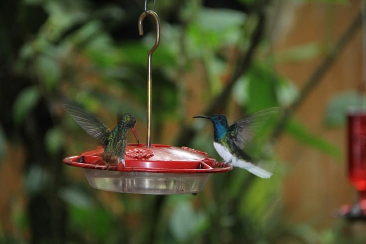 Petit déjeuner sous le regard des colibris