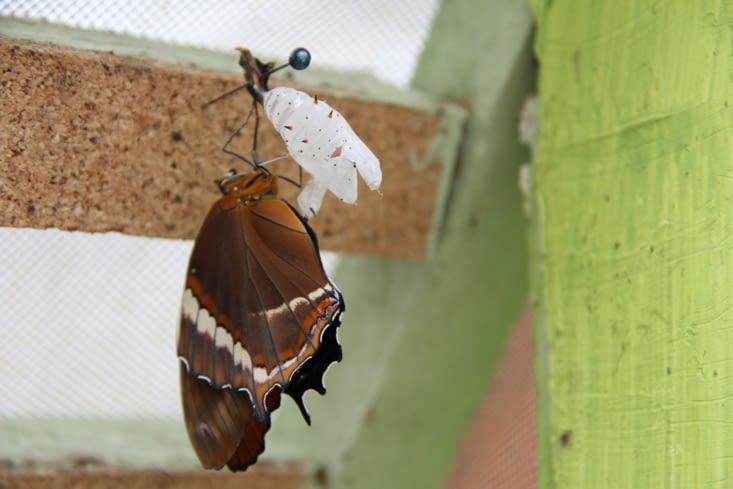 Réveil du papillon