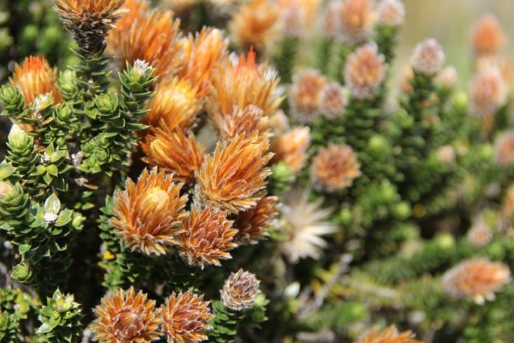 Les plantes qui poussent à 4000 m d'altitude