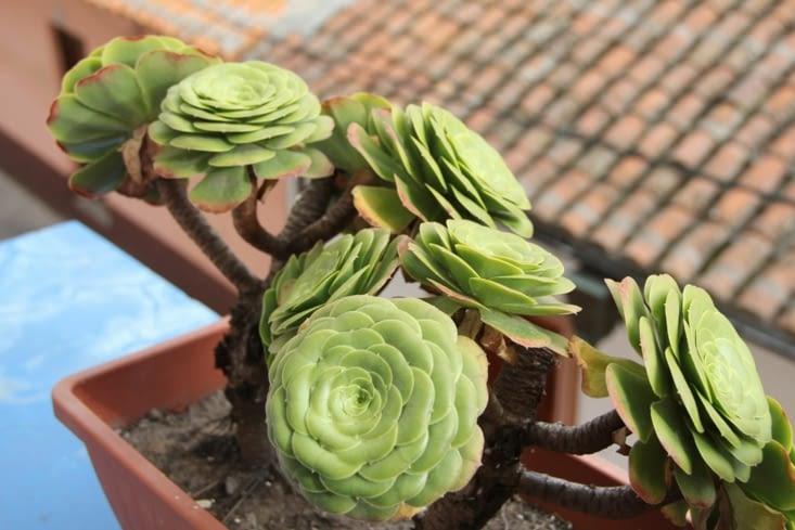 Nos fleurs au balcon