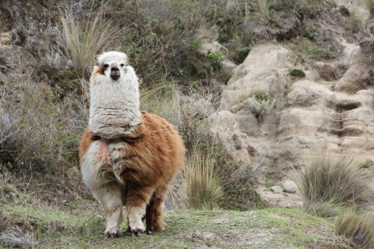 Il y a de quoi habiller un village avec toute cette laine.