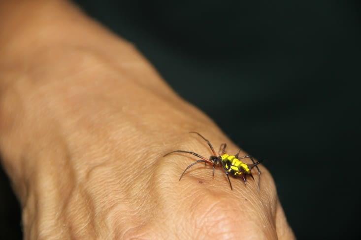 Autre araignée
