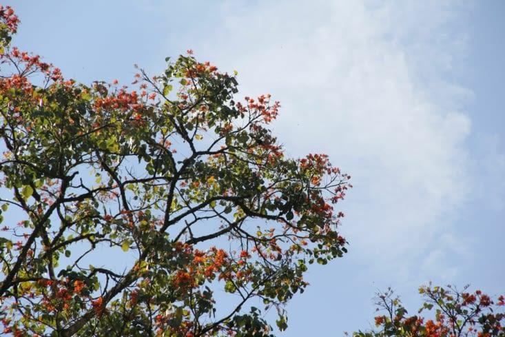 Des arbres colorés (utilisés pour l'artisanat)