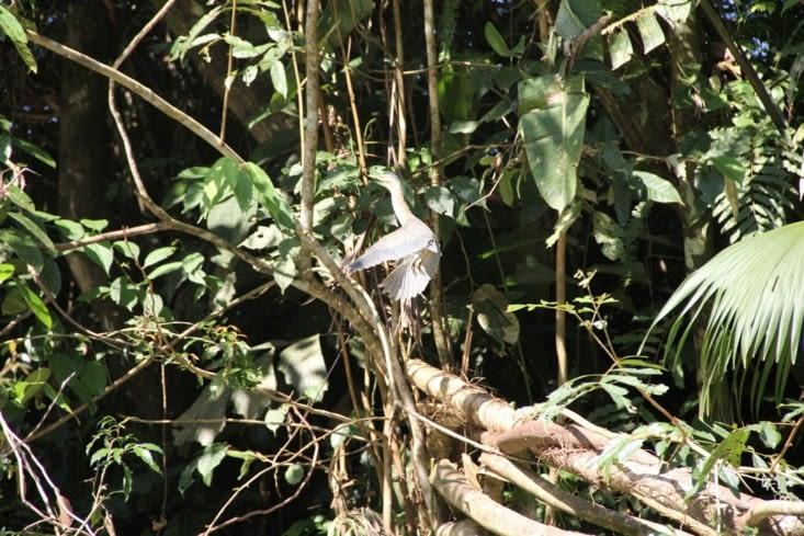 Un oiseau le long du fleuve