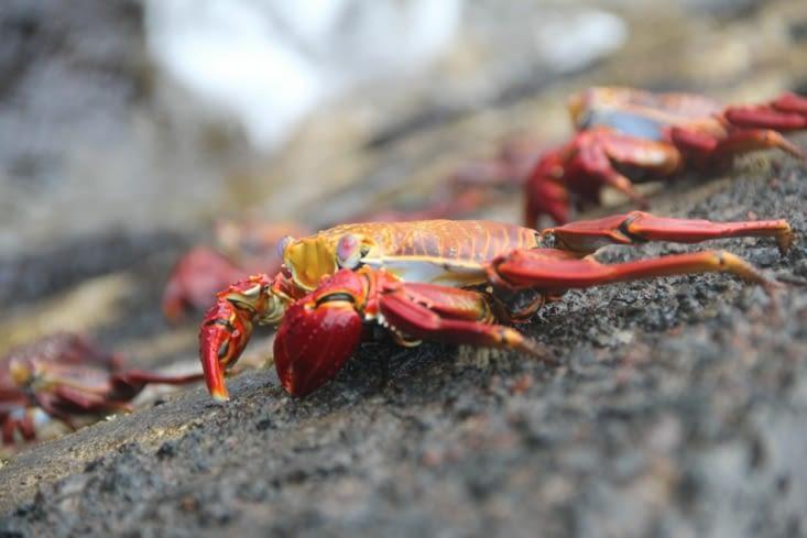 et encore des crabes