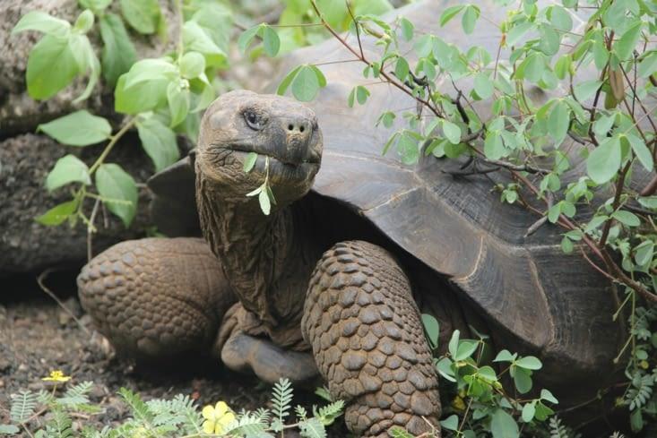 La tortue