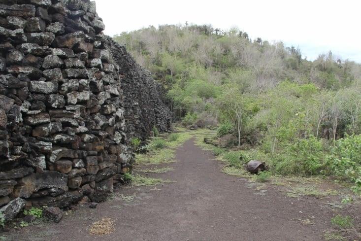 Le mur et la tortue