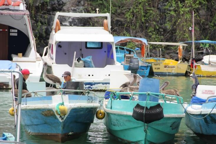 Très proches des pêcheurs