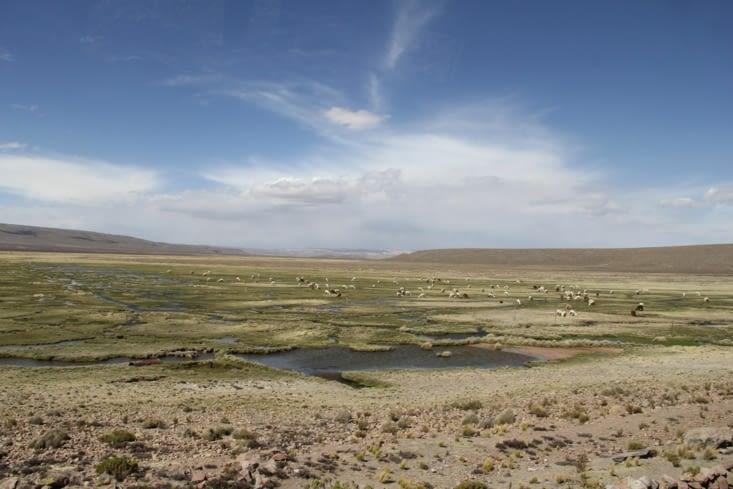 Réserve proche d'Arequipa
