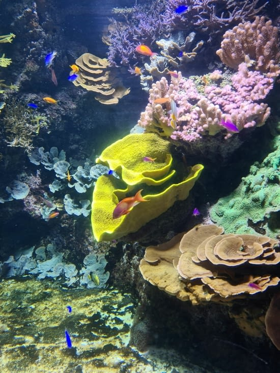 Beaux coraux