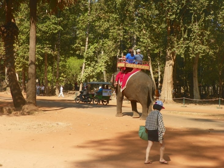 tour en elephant