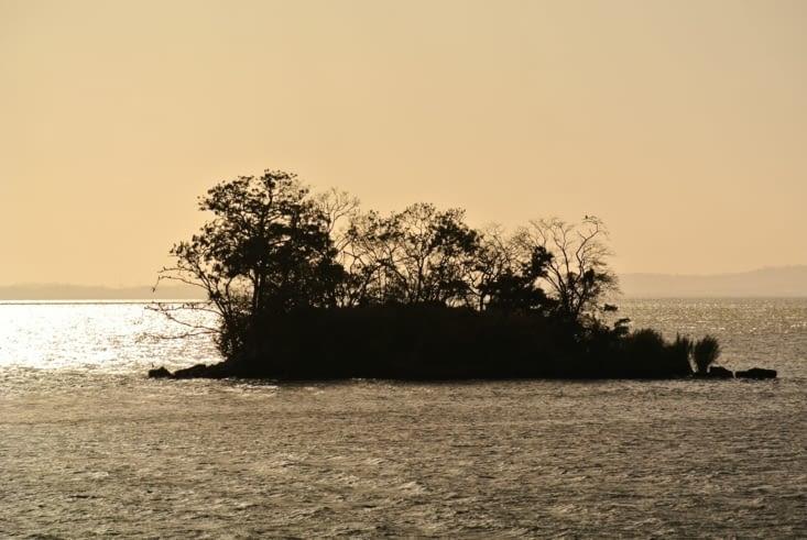 l'île aux singes