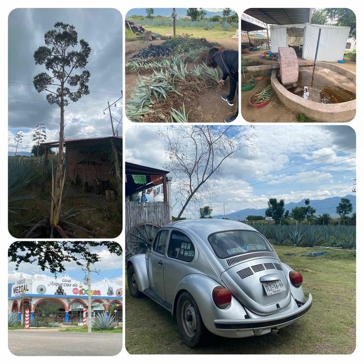 Riquezas de Oaxaca