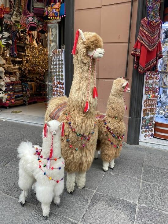 3 lamas en plein centre ville!!! 🦙