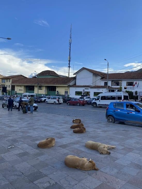 La ville des chiens??