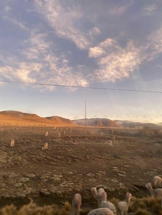 Lundi matin, levé du soleil sur un troupeau de Lama 🦙