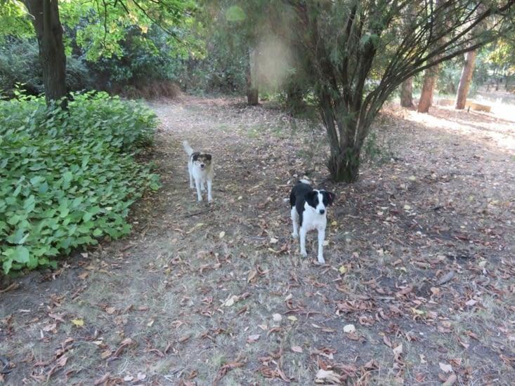 Ces chiens sauvages, part intégrante du paysage des balkans. Parfois, ils deviennent nos gardiens pour la nuit.