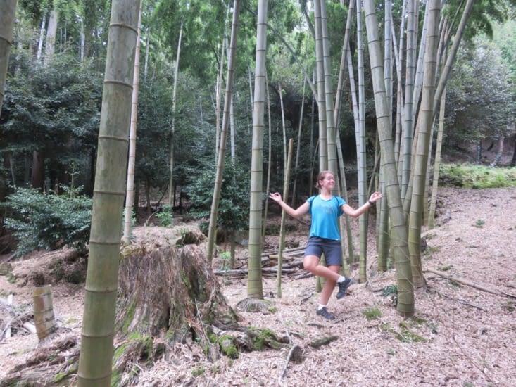 De gros bambous au temple près de 'chez nous'