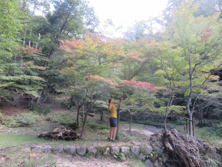 Et on tombe sur une forêt d'érables japonais aux feuilles rougissantes. Magnifique