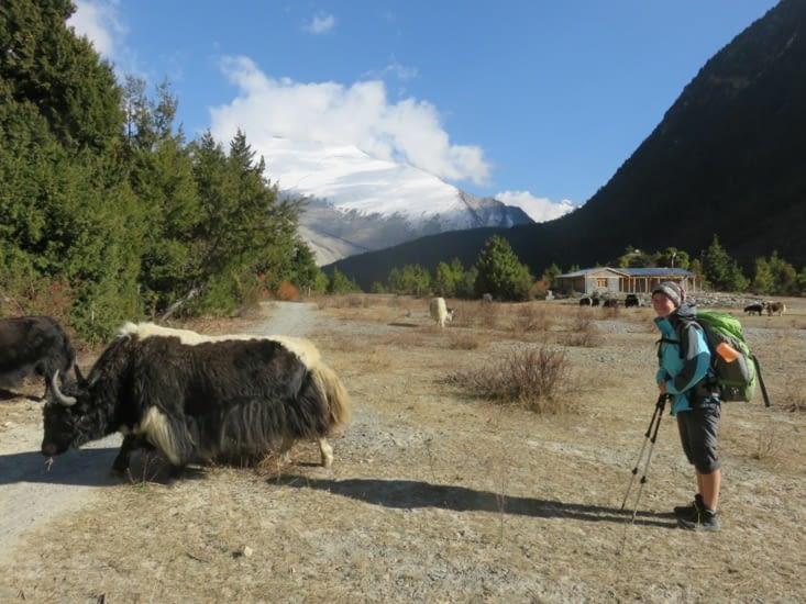 Un yak, le wall of souls vue d'ouest, Laure qui veut manger du yak.
