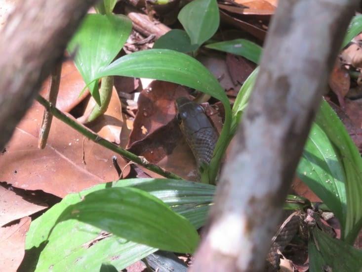 Ce serpent s'est enfui à une vitesse folle. Je crains qu'il nous batte au 100m.