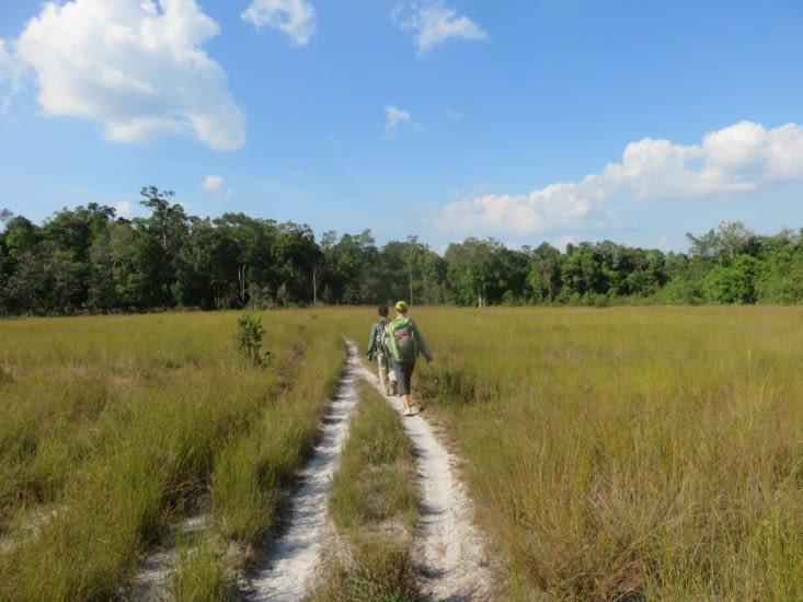 Des plaines au milieu de la forêt, restes de la coupe des grands arbres.
