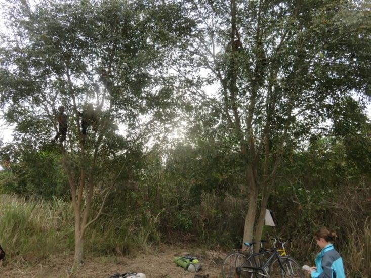 Camping sauvage: tente rangée, Clément a fait monter des gamins dans les arbres. Saurez vous trouver combien il y en a? Pas d'exploitation, ils ont été gracieusement payés en bonbons.