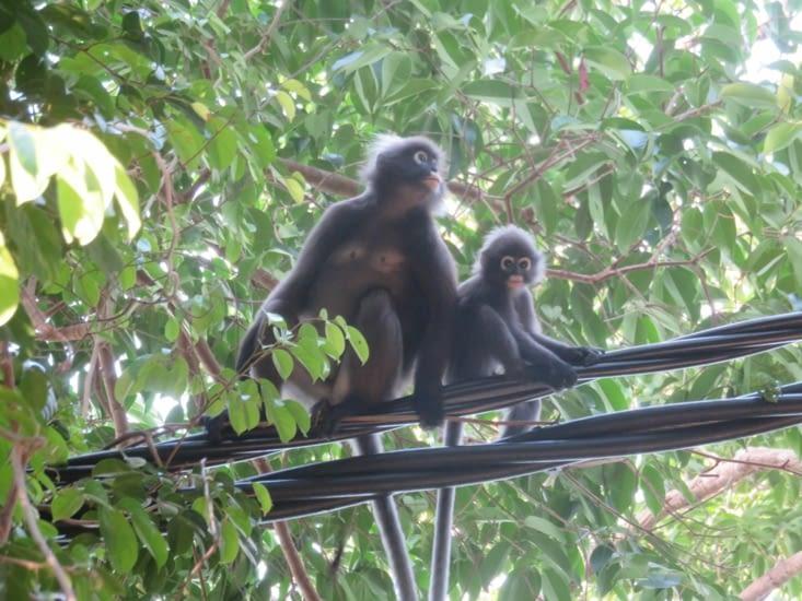 'il est pas mignon mon fils' pourrait dire cette maman singe.