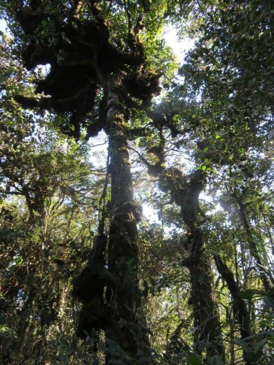 La haut, ce sont des nids de singe. Cela ressemblait a des lemuriens geants