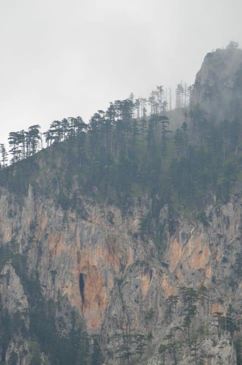 Ca pousse dru au sommet (Canyon de la Tara)